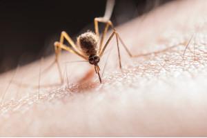 Vuoi difenderti dalle zanzare? Scopri con noi i principali rimedi naturali antizanzare
